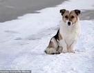 Chú chó đợi chủ suốt 6 tháng giữa trời lạnh âm 30 độ khiến dân mạng cảm động