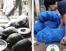 Bắt giữ xe tải chở động vật hoang dã với số lượng lớn
