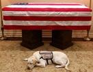 """Chó nghiệp vụ túc trực bên linh cữu cựu Tổng thống Bush """"cha"""""""