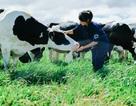 Lần đầu tiên Việt Nam có hệ thống trang trại đạt chuẩn Global GAP lớn nhất Châu Á