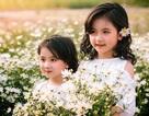 """Hai """"thiên thần nhí"""" cực xinh nổi bật ở vườn cúc họa mi"""