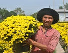 Tết Kỷ Hợi, hoa Tết nhiều, giá tăng khoảng 10%