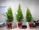 Mua cây thông Noel 85.000 đồng, bán ra gần triệu bạc, chủ shop lãi khủng mùa Giáng sinh