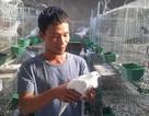 Bỏ vô lăng về quê lập nghiệp thành công với nghề nuôi chim và dế