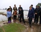Bắc Ninh treo thưởng 100 triệu đồng cho huyện cấy đúng tiến độ