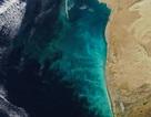 """NASA công bố ảnh """"cơn lốc sữa"""" ở biển Caspian"""