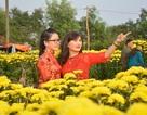 """Thiếu nữ cao nguyên """"đua sắc"""" bên vườn mai, cúc"""
