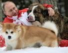 Chó cưng của Tổng thống Putin
