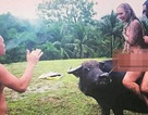 Khách Tây bị lên án dữ dội vì ảnh khỏa thân cưỡi trâu