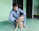 Huế: Chàng trai trẻ cứu hơn 200 con chó hoang, bệnh tật mỗi năm
