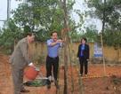 Quảng Trị: Sẽ trồng 50.000 cây xanh dịp Tết trồng cây