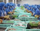EU lên tiếng về chuyến tàu chở hải sản bất hợp pháp nhập cảnh vào Việt Nam