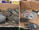 Cửa hàng từ thiện được tặng hộp xương hóa thạch có thể năm triệu năm tuổi