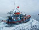 Ngư dân Lý Sơn nô nức ra khơi