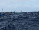 Chìm tàu cá, 11 ngư dân may mắn thoát chết