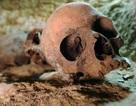 Các nhà khảo cổ vừa khám phá ra nghĩa trang cổ Ai Cập