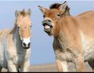 Những con ngựa hoang cuối cùng