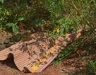 Điều tra vụ thi thể người đàn không mặc quần áo phân hủy trong rẫy
