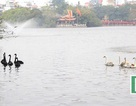 Lắp 22 máy sục khí ở hồ Hoàn Kiếm