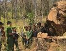 Làm rõ vụ việc 15 đối tượng phá rừng tại Vườn Quốc gia Yok Đôn