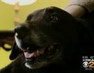 Chú chó 10 năm thất lạc, tưởng đã chết tìm về với chủ