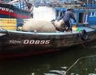 Huy động 20 tàu cá tìm ngư dân mất tích trên biển
