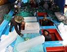 Hàng chục tàu cá ra Trường Sa đánh bắt, đón Tết trên biển