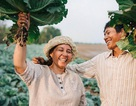 Hạnh phúc giản dị của ba và mẹ trên cánh đồng bắp cải