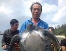 Thả một cá thể rùa 25kg về đại dương