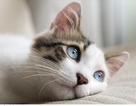 Thế giới trong mắt những chú mèo