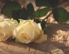 Những điều thú vị nên biết về ngày Valentine trắng