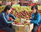 """Thương lái Trung Quốc lùng mua đặc sản Việt: Cảnh báo """"bỏ bom"""""""