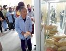 Ấm lòng với tủ bánh mì 0 đồng cho bệnh nhân nghèo nơi bệnh viện
