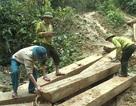 Truy rõ trách nhiệm trong vụ phá rừng nghiêm trọng ở Quảng Bình