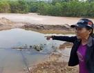 Vỡ đập mỏ vàng Bồng Miêu, cá dưới sông chết sạch