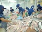 Cá tra Việt Nam bị áp thuế cao kỷ lục tại Mỹ: Xem xét khiếu kiện vì sự áp đặt vô lý