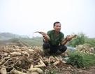 """Hà Nội sẽ xây chợ đầu mối ở nơi """"củ cải vứt đầy đường"""""""