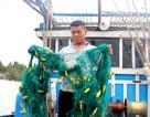 """Ngư dân Quảng Nam tố bị """"tàu lạ"""" đập phá ngư lưới cụ"""