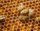"""""""Tuyệt tác kiến trúc"""" ẩn trong kết cấu lỗ 6 cạnh của tổ ong"""