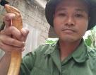 Bắt được lươn vàng, từ chối bán để nhiều người cùng được xem
