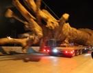 """Giật mình xe chở cây khủng như """"quái thú"""" băng băng trên quốc lộ 1 A"""