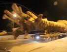 """Xe chở cây khủng như """"quái thú"""": Hàng loạt cơ quan chức năng vào cuộc"""