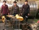 Bắt nhóm thanh niên mang bình xịt cay trộm 6 con chó