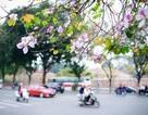 Tháng 3, Hà Nội đẹp ngỡ ngàng màu tím hoa ban