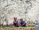 Mãn nhãn mùa hoa xuân tuyệt đẹp ở Trung Quốc