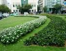 Bãi giữ xe từng bị ông Đoàn Ngọc Hải dẹp đã biến thành công viên xanh