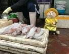 """Chú mèo bán cá, thịt gây """"sốt"""" ở chợ Hải Phòng"""