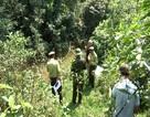 Bước đầu xác định loài thú rừng bắt hàng chục con dê của dân