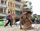 Hà Nội thiếu hơn 3.400 trụ nước chữa cháy, Sở Xây dựng bị phê bình