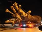 """Yêu cầu Bộ Công an, GTVT làm rõ vụ xe chở cây """"quái thú"""""""
